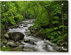 Summer Stream In Great Smoky Mountains  Acrylic Print by Darrell Young