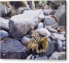Summer Streambed Acrylic Print by Sharon Freeman