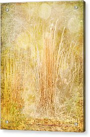 Summer's End Acrylic Print by Judi Bagwell