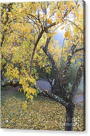 Acrylic Print featuring the photograph Summer's End by Leslie Hunziker