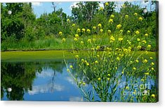 Acrylic Print featuring the photograph Summer's Glory by Jim Sauchyn