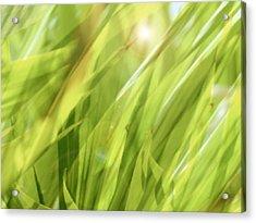 Summertime Green Acrylic Print by Ann Powell