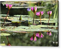 Summertime Magic Acrylic Print by Suzanne Gaff