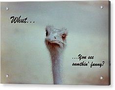 Sumthin' Funny Acrylic Print by Deborah  Crew-Johnson