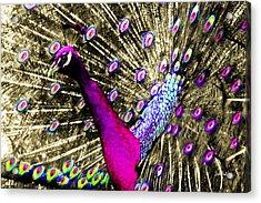 Sun Beam Peacock Acrylic Print by Stephen Paul West