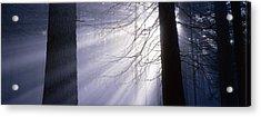 Sun Breaking Through Mists Acrylic Print by Ulrich Kunst And Bettina Scheidulin