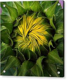 Acrylic Print featuring the photograph Sun Center by Deborah Smith