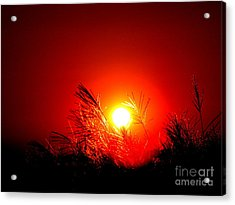 Sun Drop Acrylic Print by Laurence Oliver