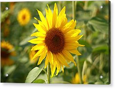 Acrylic Print featuring the photograph Sun Flower by Coby Cooper