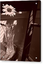Acrylic Print featuring the photograph Sun In The Shadows by Lynnette Johns