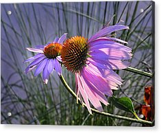 Acrylic Print featuring the photograph Sun Kissed Cones by Nava Thompson
