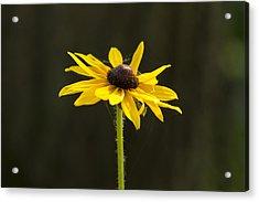 Sun Lit Acrylic Print by Dean Bennett