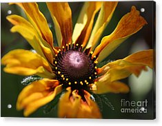 Sun On Flower Acrylic Print by David Taylor
