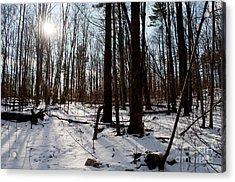 Sun On The Wild Turkey Trail Acrylic Print by Gary Chapple
