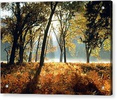 Sun Rays Passing Through Golden Trees  Acrylic Print by ilendra Vyas