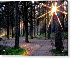 Sun Rays Acrylic Print by Sonya Kanelstrand