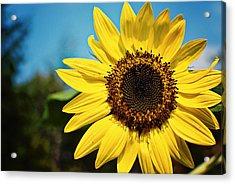 Sun Acrylic Print by Robin Morse