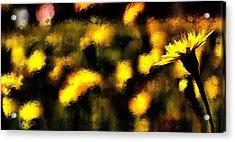 Sun Worshiper Acrylic Print