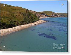 Sunbathing Elephant Seals Along A Beach At Point Reyes California . 7d16058 Acrylic Print by Wingsdomain Art and Photography