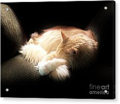 Sunbeam Dreams Acrylic Print by Judy Via-Wolff