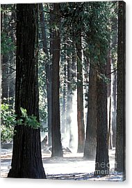 Sunbeams Through The Trees Yosemite National Park Color Acrylic Print