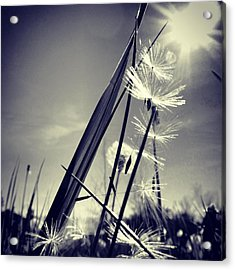 Suncatcher - Instagram Photo Acrylic Print by Marianna Mills