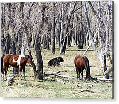 Acrylic Print featuring the photograph Sunday Afternoon by Clarice  Lakota