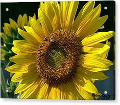 Sunflower 4 Acrylic Print by EricaMaxine  Price