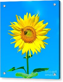 Sunflower And Bee Acrylic Print by Debbi Granruth