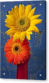 Sunflower And Mum Acrylic Print by Garry Gay