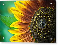 Sunflower Beauty Acrylic Print