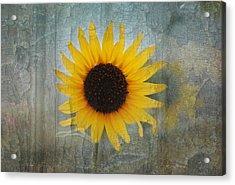 Sunflower Burst Acrylic Print by Lisa Moore