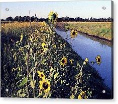 Sunflower Canal Acrylic Print by Eunice Olson