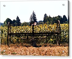 Sunflower Farm Scene Acrylic Print