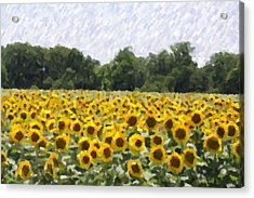 Acrylic Print featuring the photograph Sunflower Field by Donna  Smith