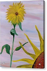 Sunflower Acrylic Print by Mark Moore