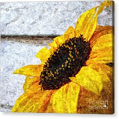 Sunflower Paint Acrylic Print by Slavi Begov