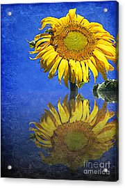 Sunflower Reflection Acrylic Print by Andee Design