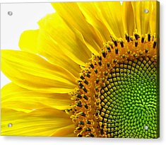 Sunflower Segments Acrylic Print
