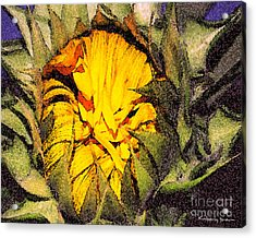 Sunflower Slumber Acrylic Print