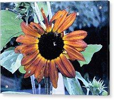 Sunflower With Bee Acrylic Print by Eunice Olson