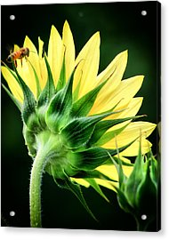 Acrylic Print featuring the photograph Sunflower With Bee by Lynne Jenkins