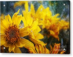 Sunflowers Acrylic Print by Alyce Taylor