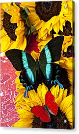 Sunflowers And Butterflies Acrylic Print by Garry Gay
