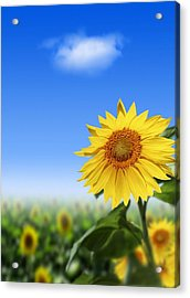 Sunflowers, Artwork Acrylic Print by Victor Habbick Visions