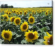 Acrylic Print featuring the photograph Sunflowers by Cheryl McClure