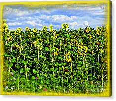 Sunflowers In France Acrylic Print by Joan  Minchak