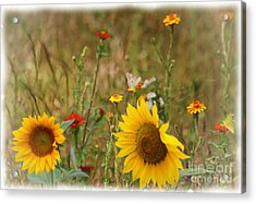 Sunflowers In  The  Wild  Acrylic Print