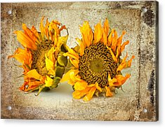 Sunflowers No 413 Acrylic Print