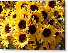 Sunflowers Acrylic Print by Paulette Thomas